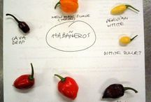 HOT CHILI - PEPERONCINO