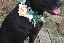 Be: Dog Flower Collar / Dog flower collar to be at a comfortable size. Nothing too large as there could be a risk that they come apart. The style is to match with the my bouquet and flower crown.