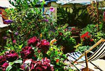 own gardens