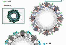 Schemi beads