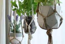 Plant hangers, plants and more