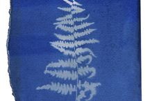 Signs of Life / Cyanotype images- 19th Century photographic process using objects and sunlight on sensitized paper.