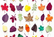 Leaves / by Lee Lisa