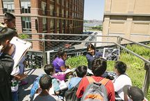 High Line Families