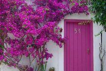 Çiçekler ve Bahçeler