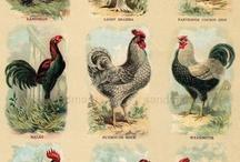 Poultry Vintage