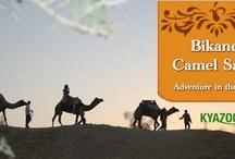 KyaZoonga.com: Buy tickets for the Camel Desert Safari, Bikaner