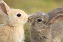 Cute / Cute babies & Animals