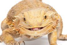 Dragons :)