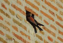 Birdwatching blog / Birding tours experiences...