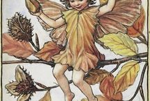 Gumnut babies, garden fairies & related