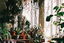 Home and plants / Home decor etc.