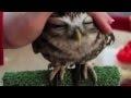 I <3 Owls!