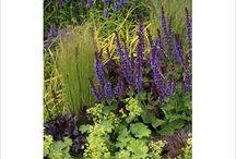 Niebieski w ogrodzie