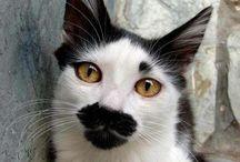 mustache cats