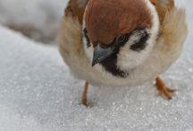 鳥 photo