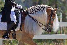Vakre hestar