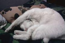 Cleopatramycat / This is my cat, Cleopatra-Esta es mi gata, Cleopatra