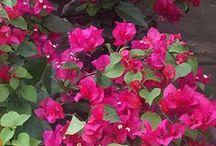 DIY Flower Arranging / Flower Arrangements