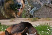 Eläimet / Söpöläiset
