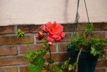 Jardines verticales / Jardines en paredes