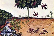 Historical Garden Illustrations