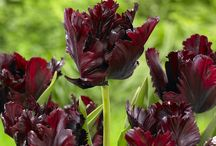 Editor's Picks / Look no further: Here is a curated selection of the media's favorite flowers and bulbs from Longfield-Gardens.com