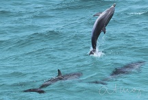 The Best Dolphin pics of 2013 / The best pictures from our 2013 WildQuest retreats in Bimini. Updated weekly.