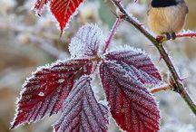 Perché a anche l'inverno può essere bello....qualche volta! / by saviana caredda