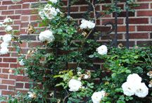 Brick house with climbing roses