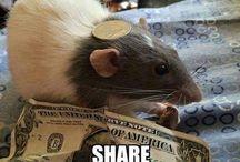 Rats & Mice!