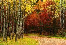 Nature's Beauty / by Rachel Glancy