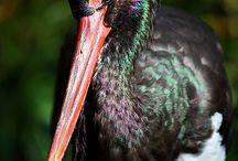 Ptaki / Ruda Kameralna wioska pozytywnie zakręcona  / https://www.facebook.com/rudakameralna #rudakameralna, #ruda, #kamerlana, #podroz, #wies, #wypoczynek, #spokoj, #cisza, #natura, #eco, #zdrowie,