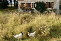 Domy na wsi
