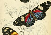 ****papillons