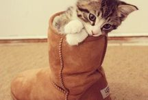Cuty pies!