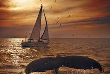 lets sail away....