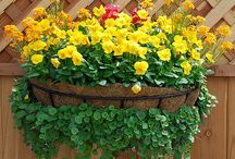 Outdoor Container Flowers