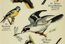 ID Chart. Birds