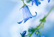 Floral Florish / by Sharon Scherbinski