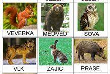lesne zvieratka