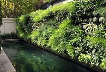 Gardens > Green walls