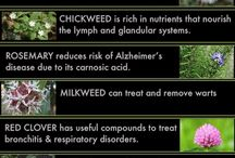 healing weeds and herbs / Especially garden weeds that are beneficial to our body