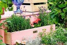 garden ideas / by Diane Williams