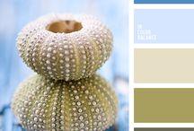 Color Combinations / Paint