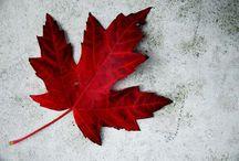 SEO PPC Canada