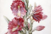 çiçek minyatürleri