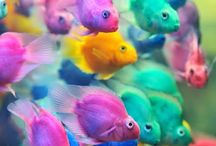Beautiful fish ><>