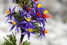 Western Australia Botanical