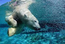 Ζώα του πλανήτη μας.